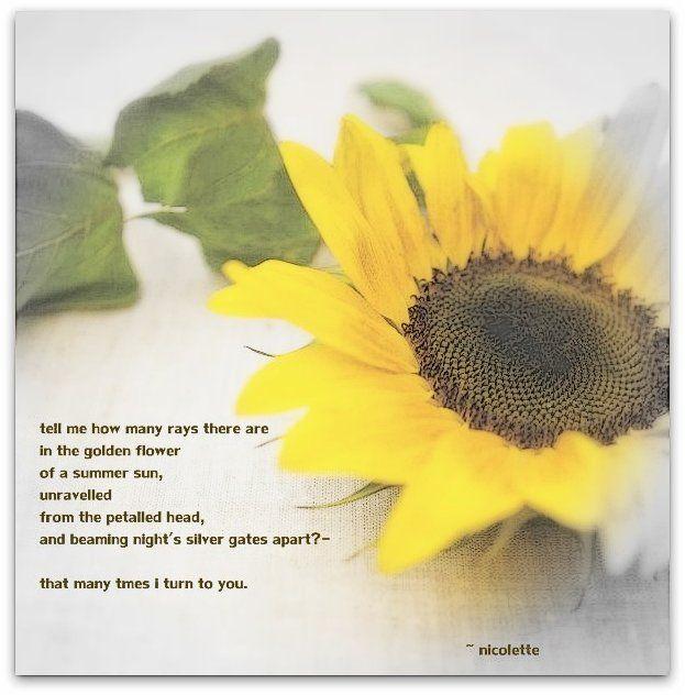 Sunflower © Nicolette van der Walt