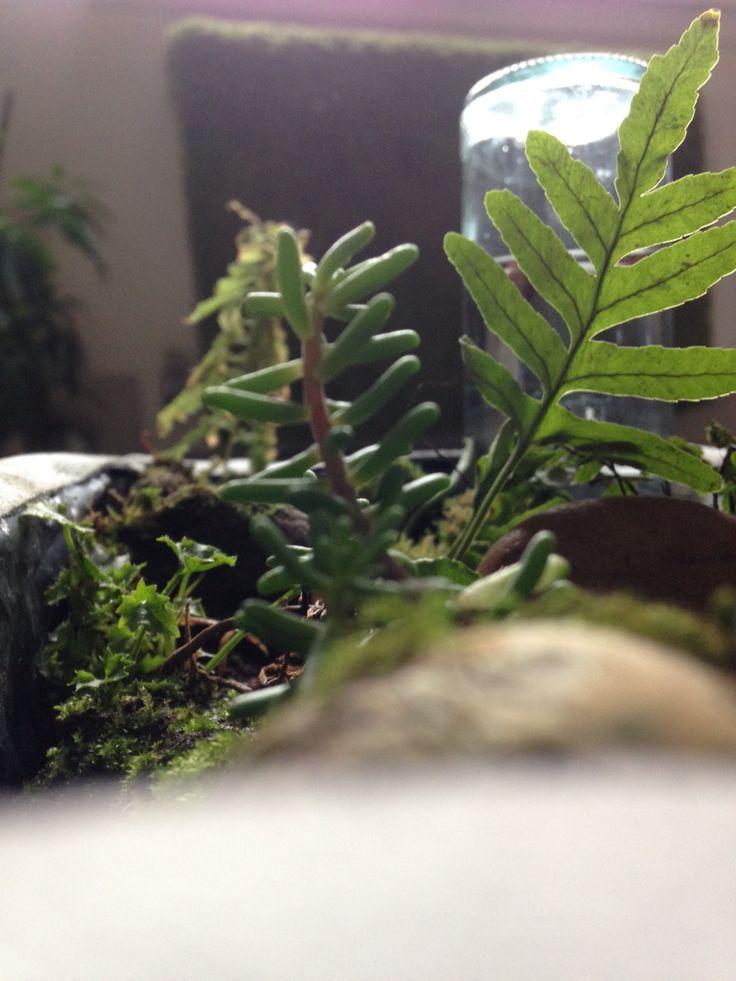 Jardin d 39 int rieur plantes r colt es foug res arrosage for Arrosage plante interieur