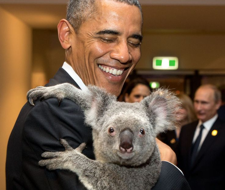 PetsLady's Pick: Cute Koala Hug Of The Day ... see more at PetsLady.com ... The FUN site for Animal Lovers
