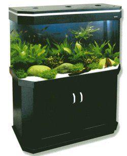 tank aquarium ideas pet aquarium fish tank aquarium green aquarium ...