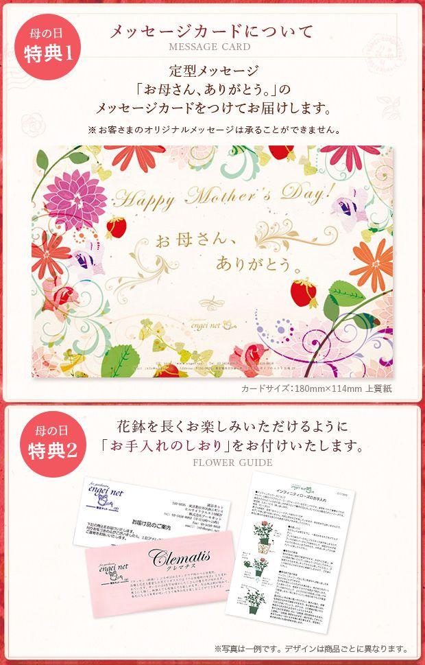 [送料無料][2015年母の日ギフト][予約]アジサイ:ダンスパーティ(ピンク) 5号鉢植え:季節のイベント 通販 engei.net