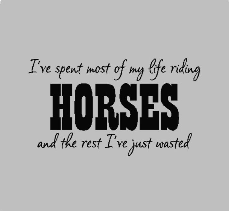 Funny Co Worker Birthday Quotes: 1000+ Ideas About Funny Horse Sayings On Pinterest