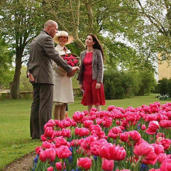 Die wunderschöne, neue Tulpe 'Crownprincess Mary' wurde nach der Kronprinzessin Mary von Dänemark benannt. Pflanzzeit ist im Herbst - online erhältlich bei www.fluwel.de