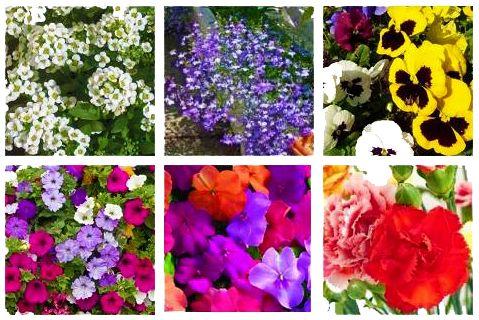 Plantas Anuales y permanentes para las Jardineras