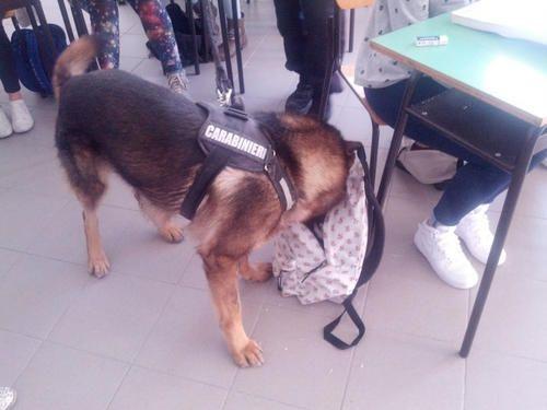 #Umbria: #Cane antidroga tra i banchi di scuola a Nocera: hashish e marijuana nelle scarpe di uno studente da  (link: http://ift.tt/1skqI9s )