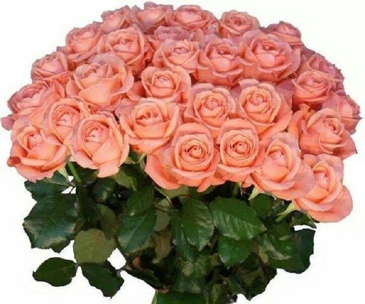 Картинки цветов для сестры
