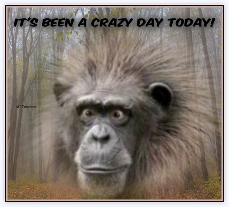 It's been a crazy day today! AC Creations Quotes