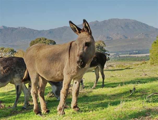 Donkeys! At The Old Village in Citrusdal http://www.portfoliocollection.com/go/The-Old-Village#