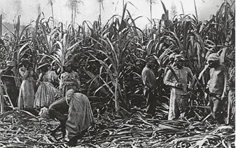 Plantation Life in the 1800s | ... Sugar Plantation on the island of Reunion in the late 1800's 5
