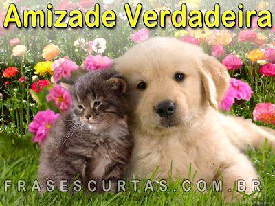 www.amizade e falcidade.com | Frases de Amizade: Mensagens sobre Amizade Verdadeira