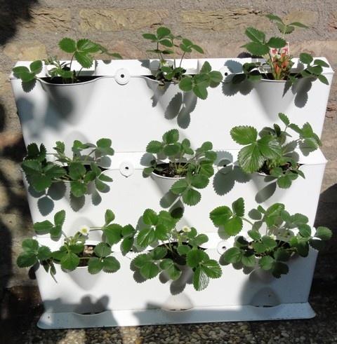 Verticaal tuinieren met aardbeien tuin pinterest penthouses and gardens - Outdoor tuinieren ...