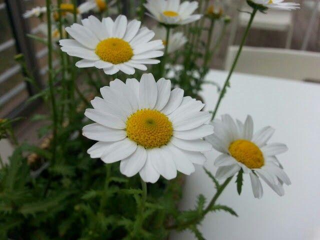 테이블의 꽃