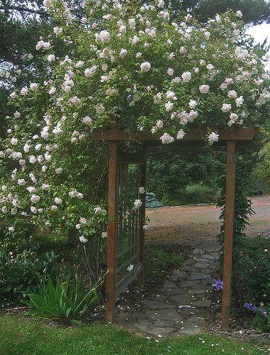 41 best images about pergola on pinterest gardens green. Black Bedroom Furniture Sets. Home Design Ideas