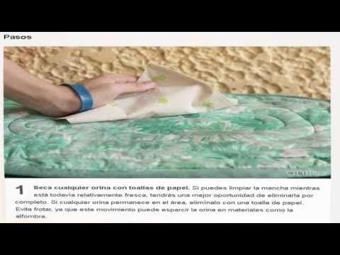 Metodos para eliminar la orina de gato - YouTube