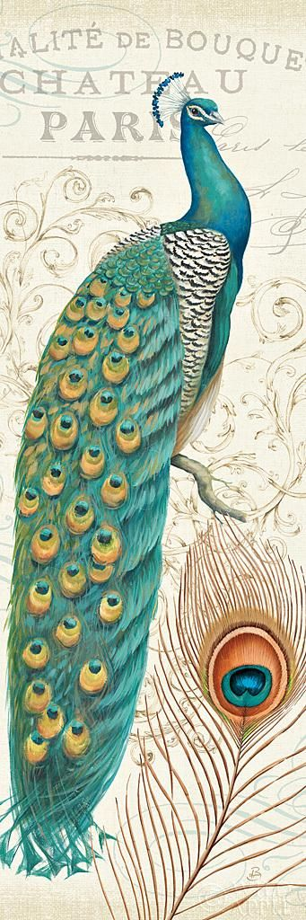 Peacock Vintage Art...A Wild Apple Print