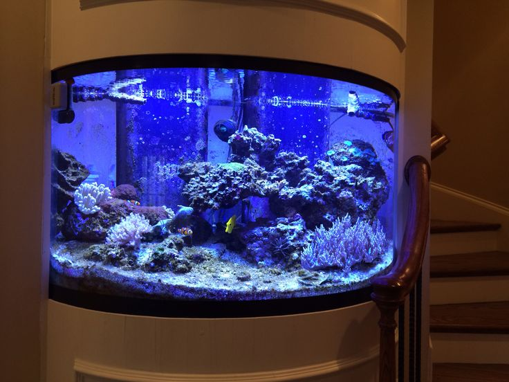 Simple and Unique Aquarium Design Ideas ~ http://www.lookmyhomes.com/pick-one-of-unique-aquariums-design-ideas-for-your-fish/