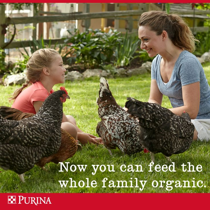 Organic chicken feed = Organic eggs for your family.   Learn about our organic chicken feed: www.PurinaOrganicFeed.com.