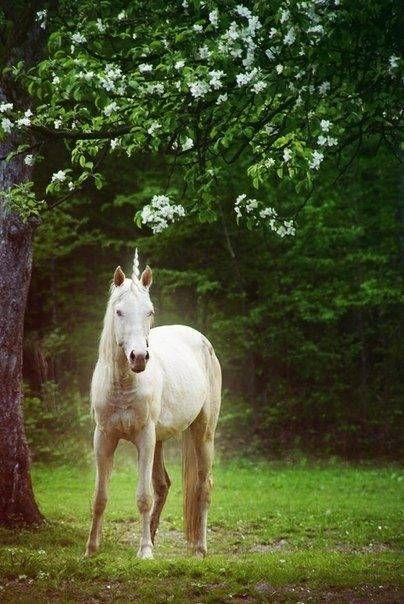 Omg the unicorn is glowing