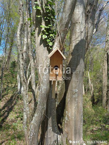 """Скачивайте роялти-фри фото """"Homemade birdhouse on tree in spring forest"""", сделаную lana4ka по самой низкой цене на Fotolia.com. Полистайте наш банк изображений и найдите идеальную стоковую фотографию для вашего маркетингового проекта!"""
