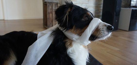 Nach meinem erfolgreich absolvierten Erste-Hilfe-Kurs am Hund möchte ich euch die wichtigsten Punkte für den Alltag gerne mitgeben. Hier fange ich mit dem Thema Schockzustand an. Kurz möchte ich eu…