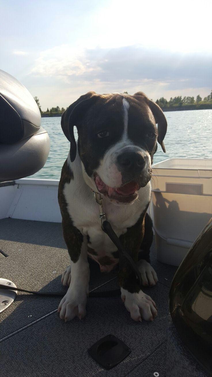Boat ride with my American Bulldog