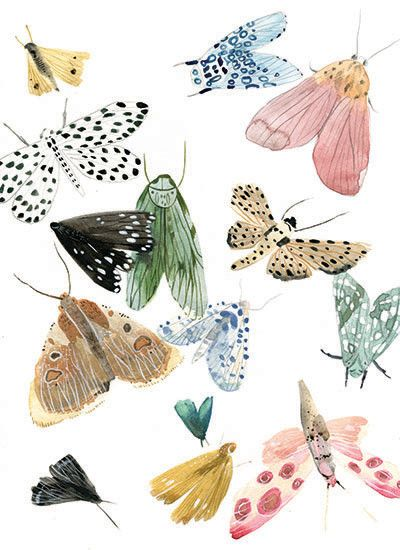 Watercolor moths and butterflies so pretty