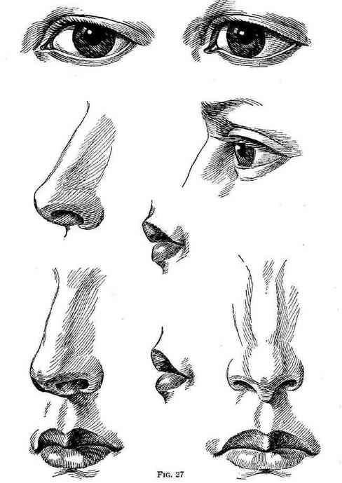 how to draw semi realistic noses