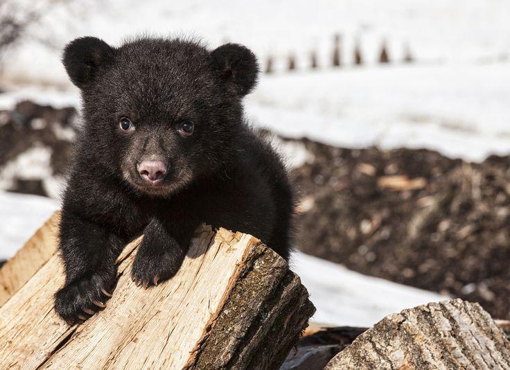 OMGosh!  Where Do Bears Hibernate in the Great Smoky Mountains National ...