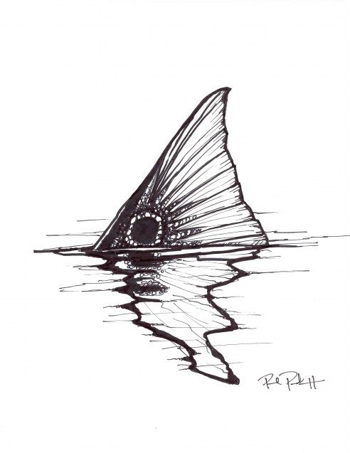 A coolsketch of a tailing redfish from Paul Puckett.