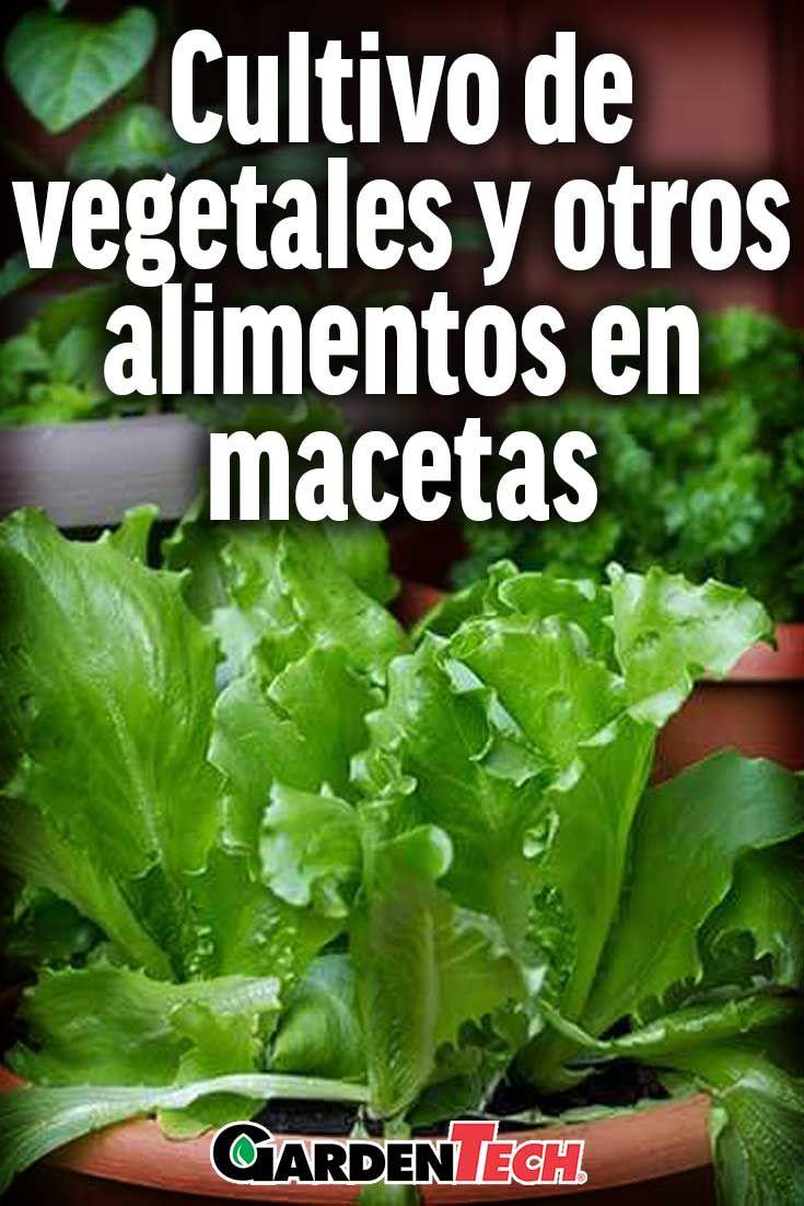 cultive plantas comestibles y rboles frutales en macetas para convertir los espacios pequeos en huertos
