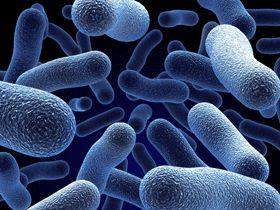 microbiologia -