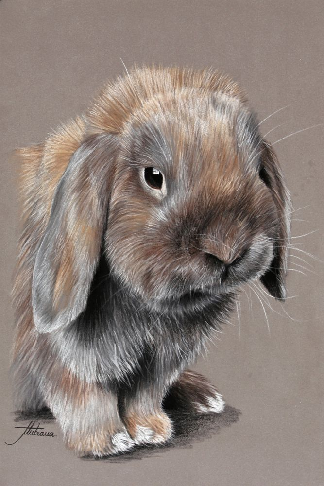 Tierpastelle   Tierische und pferdeartige Pastelle – Fotografien – Gemälde