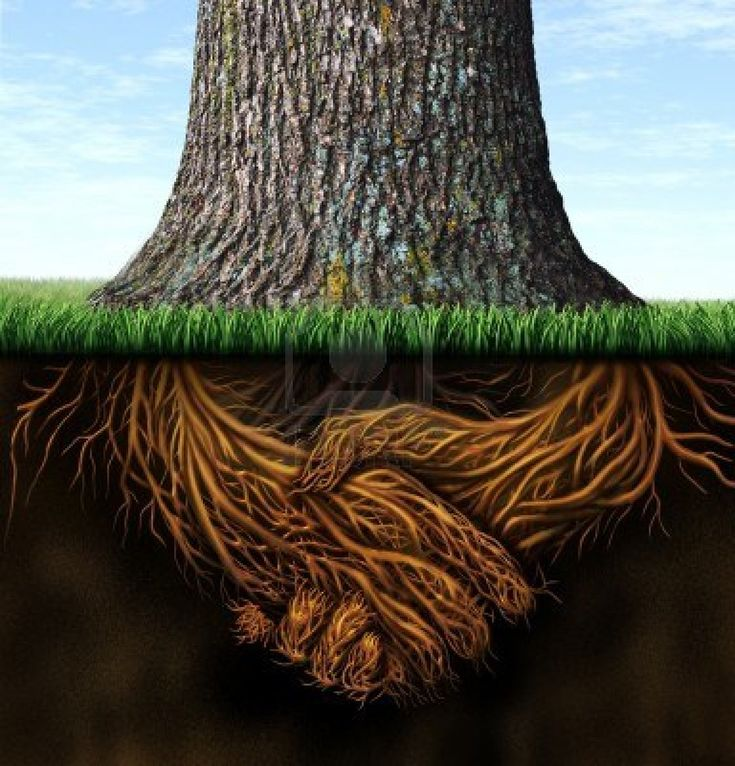 Strong deep business roots as a tree trunk with the root in the shape of a hand shake as a symbol of unity trust and integrity in finance and relationships  Stock Photo - 15491712