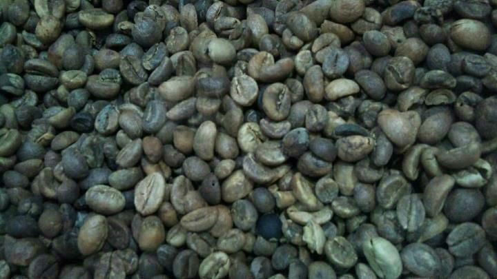 Civet Coffee / Kopi Luwak