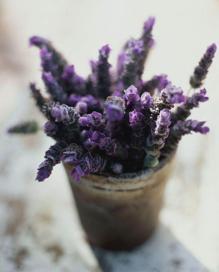 Lavender - ELLEDecor.com