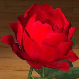 Piwonia czerwona 3D www.florysta3d.pl