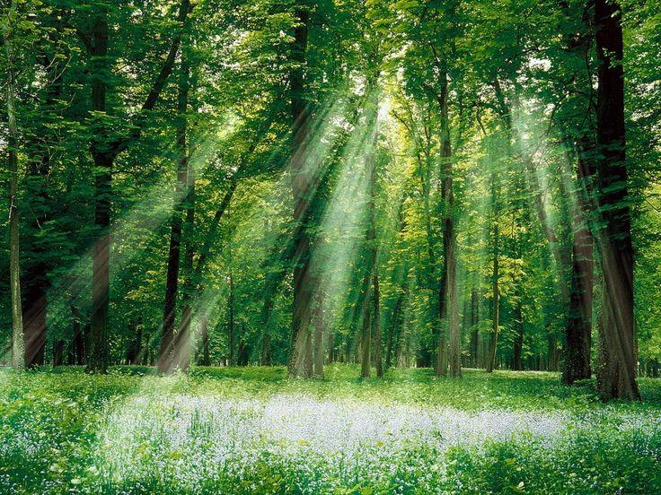 Orman Resimleri | Orman ve Güneş Işınları