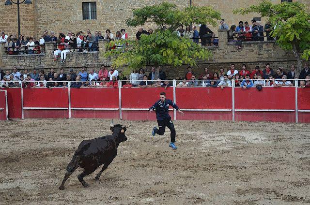 Santacara: Vacas de Santos Zapatería (5)