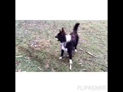 Dog Kennels Healesville - Playtime for family dogs - Melbourne Dog Boarding Kennels   Badgercreek Dog Boarding Kennels and Cattery   Melbourne Dog Boarding Kennels   Badgercreek Dog Boarding Kennels and Cattery