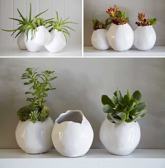 A Wonderful Collection of Plant Containers for House Plants