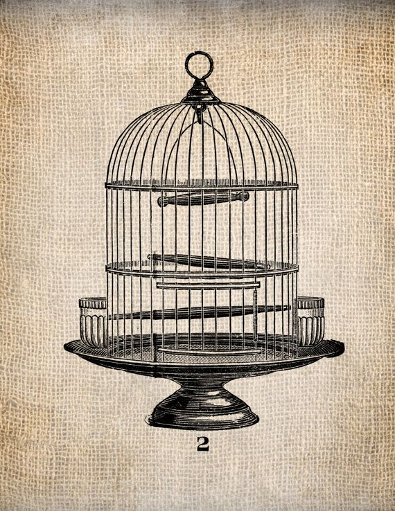 48 Best Chirp Images On Pinterest Bird Cage Bird Cages
