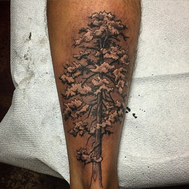 69 best forest tree wrist images on pinterest forest for Ponderosa pine tattoo