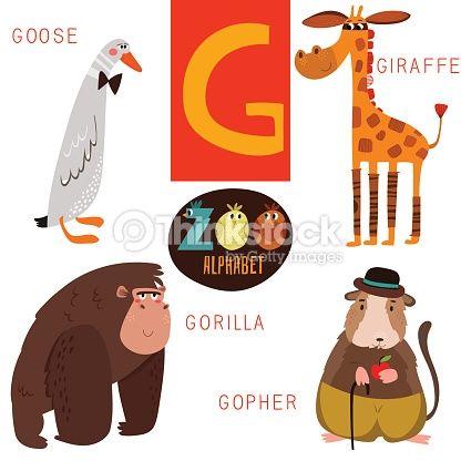 Arte vectorial : Linda Zoológico alfabeto de vector. G carta. Animales divertidos dibujos animados