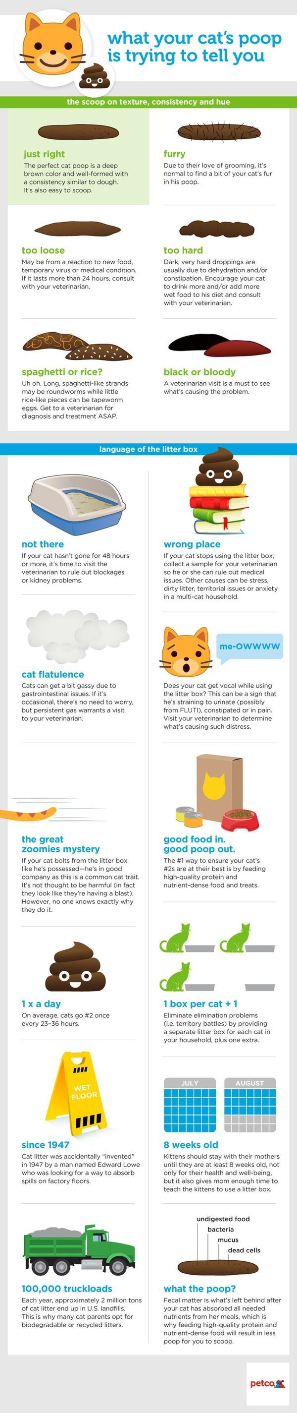 Cat Care - Products to Help Owners Cat Care Advice