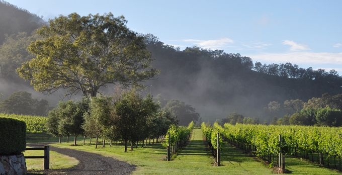 Sarabah Estate Vineyard - Vineyard Wedding Gold Coast $1500