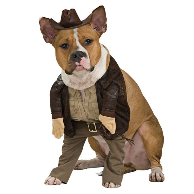 Funny Dog Costumes | and funny dog costumes including all of the most popular favorites ...