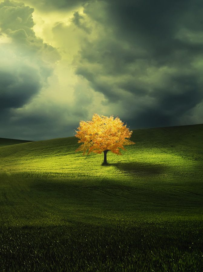 ~~Yellow ~ lone tree in a spring meadow by Besmir™~~