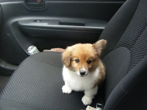 OMG OMG could you IMAGINE having this little guy in your car?!