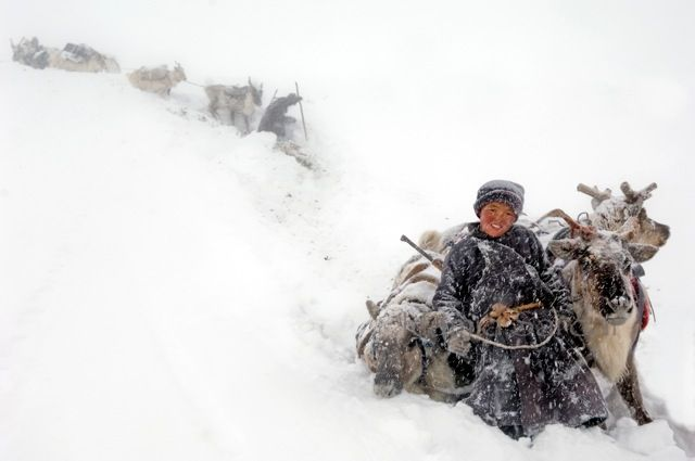 """The Dukha think of themselves as """"sharing"""" the landscape rather than owning it. It is perhaps for this reason their connection with the animals is so strong. Their story is very interesting & the photos are beautiful:                                      http://matadornetwork.com/abroad/photos-lost-mongolian-tribe-incredible/"""