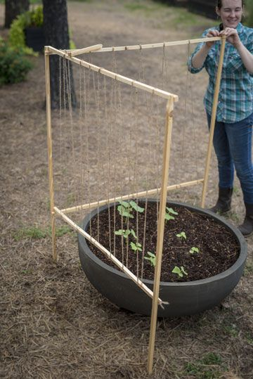 Easy Homemade Trellis DIY to Support your Plants | P. Allen Smith